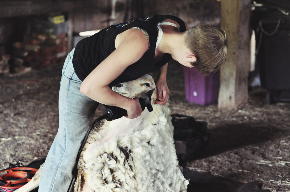Shave and a haircut :: Shearing the sheep - MommyCoddle