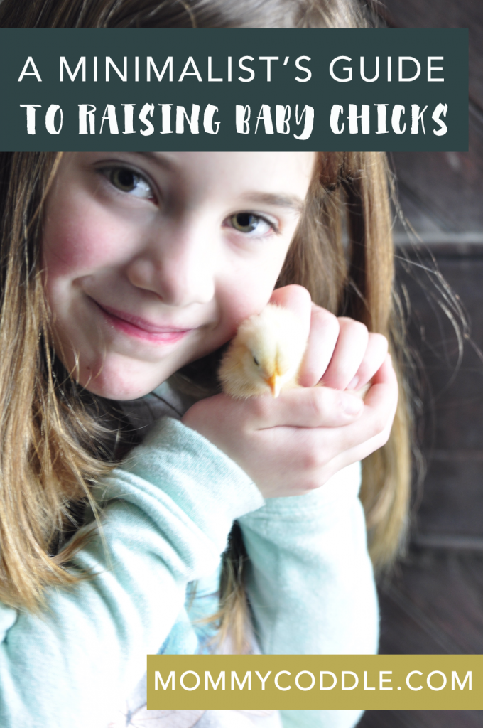 This is a great guide to raising baby chicks. This blogger breaks it down and makes it simple. Tells you just what you need to know.