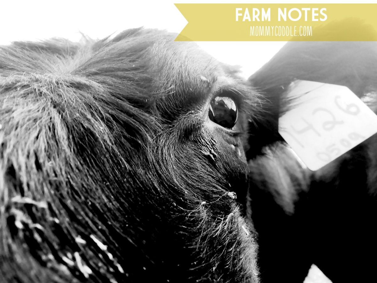 Love how this blogger shares weekly notes from her daily chores and life on her farm.