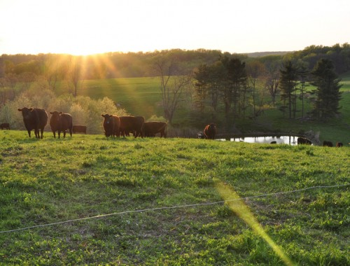 farm notes: morning chores