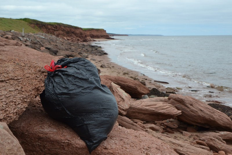 The wool checks out the beautiful shoreline of PEI.