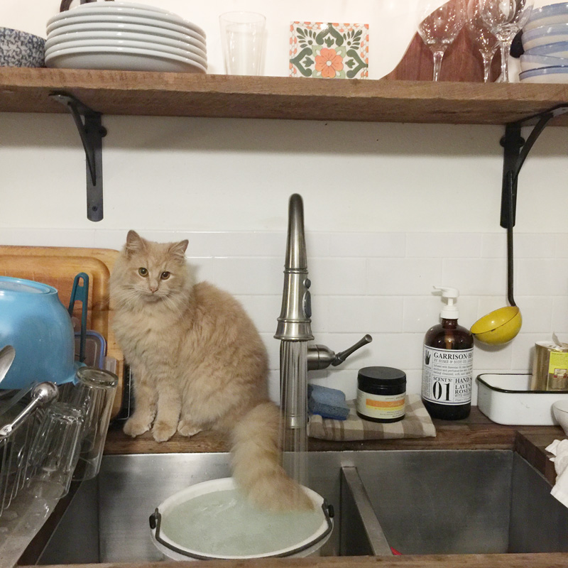 When you've been inside too long and your standards start to slip in the form of cats on the counters.