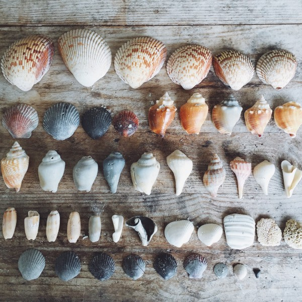 seashell collection via mommycoddle.com